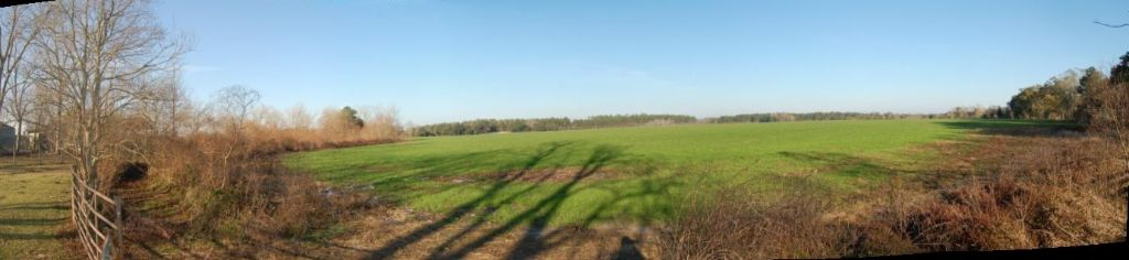 Driskel field green grass