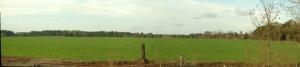 20140102 Pano pasture