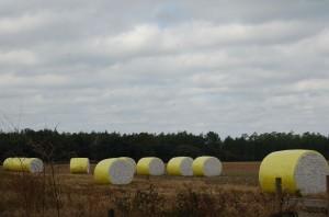 Cotton Bails