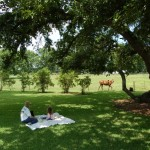 The Picnic with horse