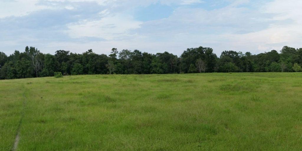 pano-creek-field